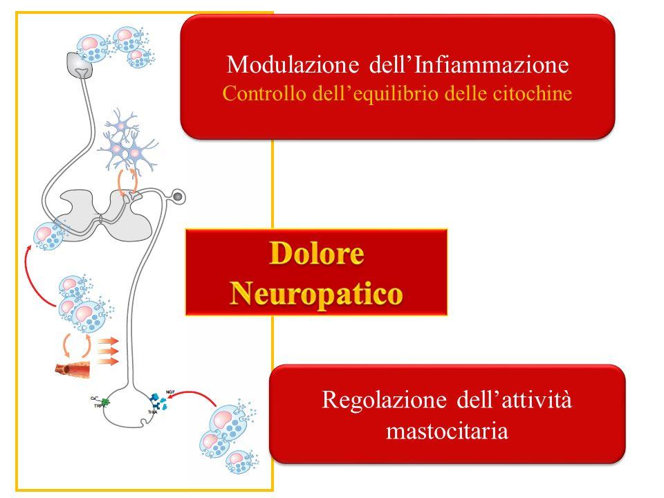 Dolore Neuropatico Modulazione dell'Infiammazione