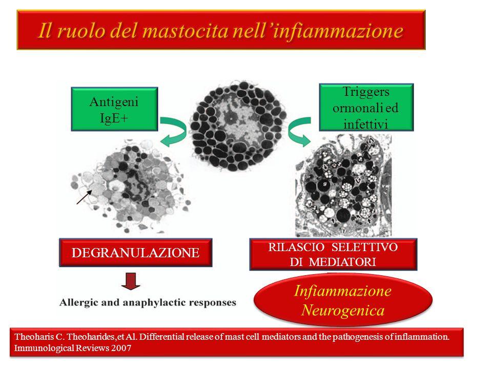 Il ruolo del mastocita nell'infiammazione