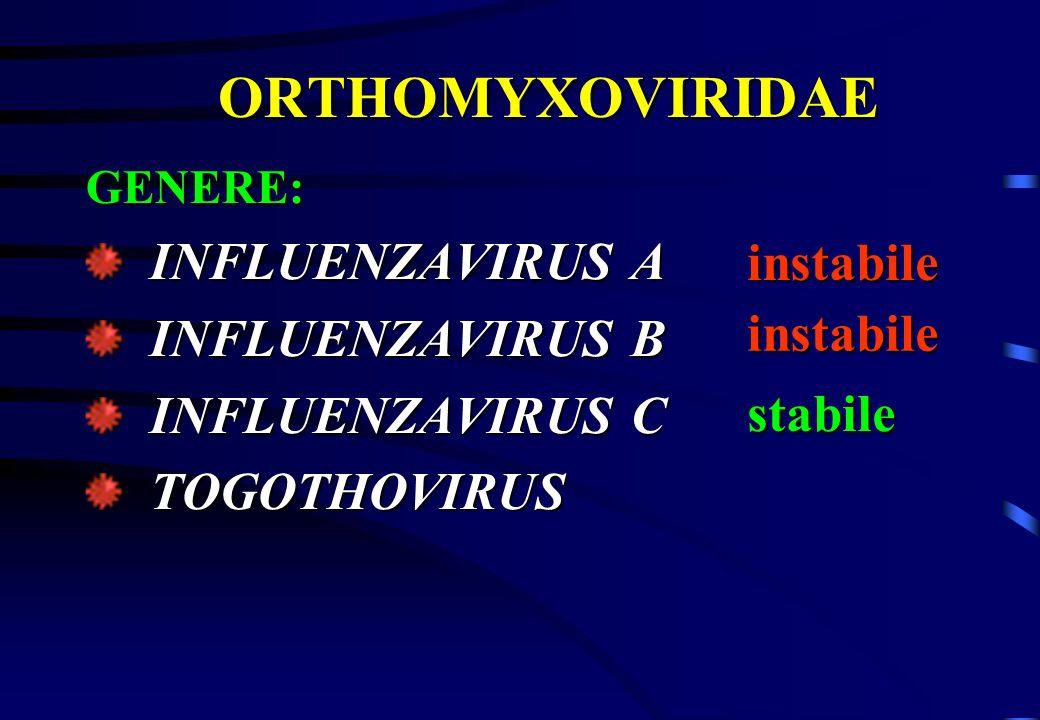 ORTHOMYXOVIRIDAE INFLUENZAVIRUS A INFLUENZAVIRUS B instabile