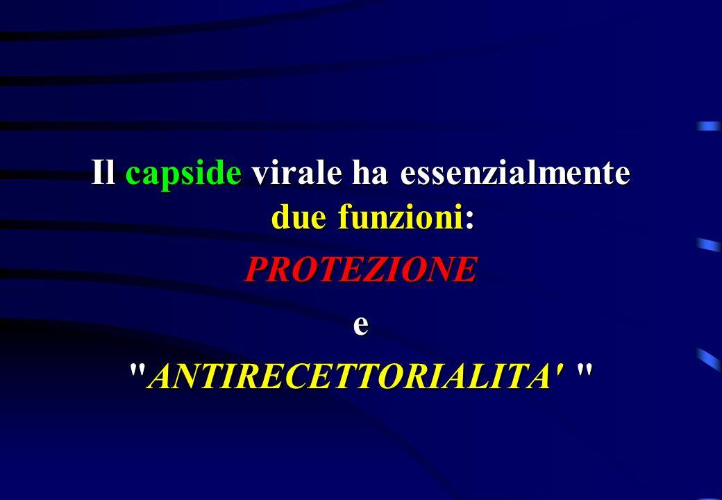 Il capside virale ha essenzialmente due funzioni: