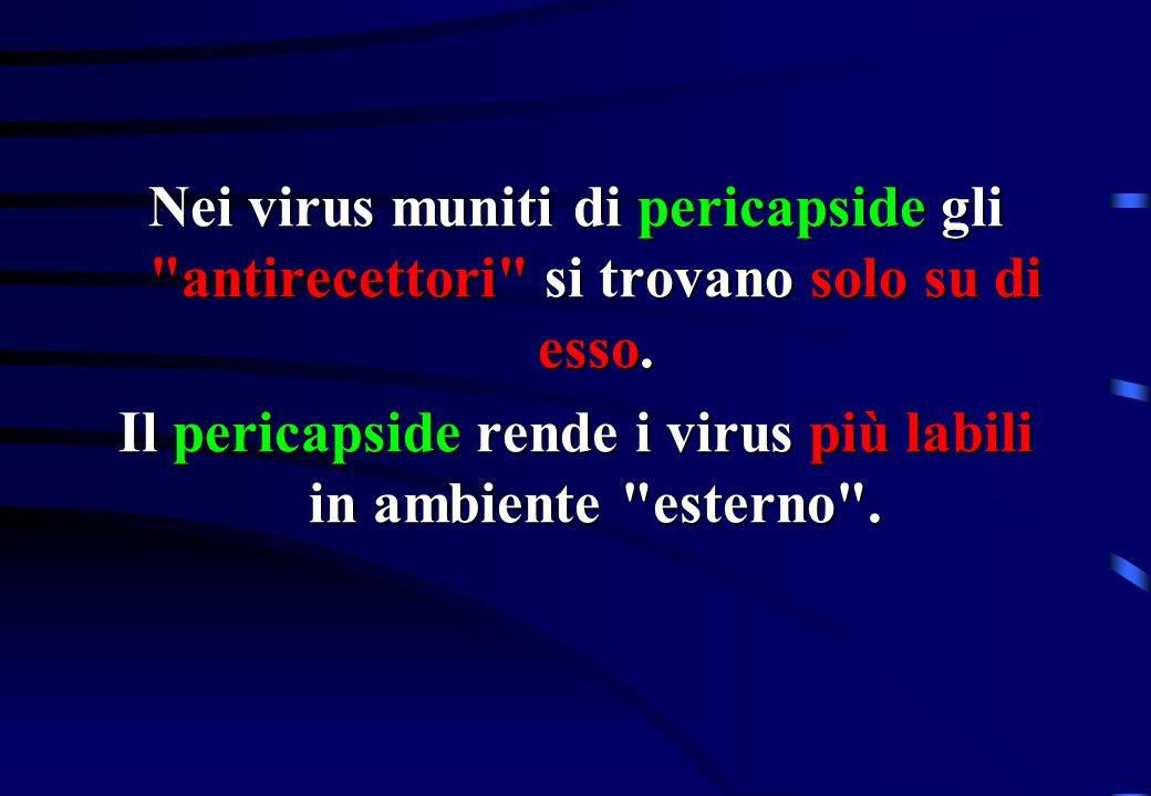 Il pericapside rende i virus più labili in ambiente esterno .