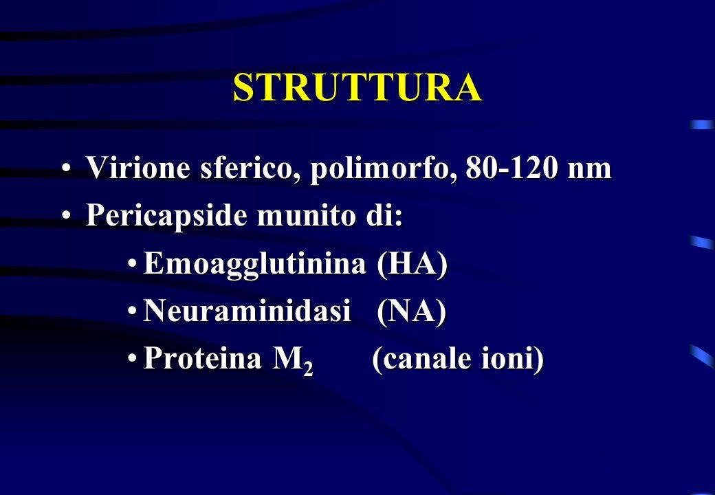 STRUTTURA Virione sferico, polimorfo, 80-120 nm Pericapside munito di: