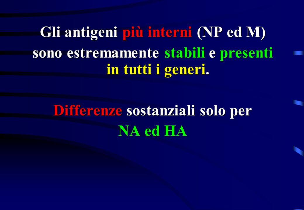 Gli antigeni più interni (NP ed M)
