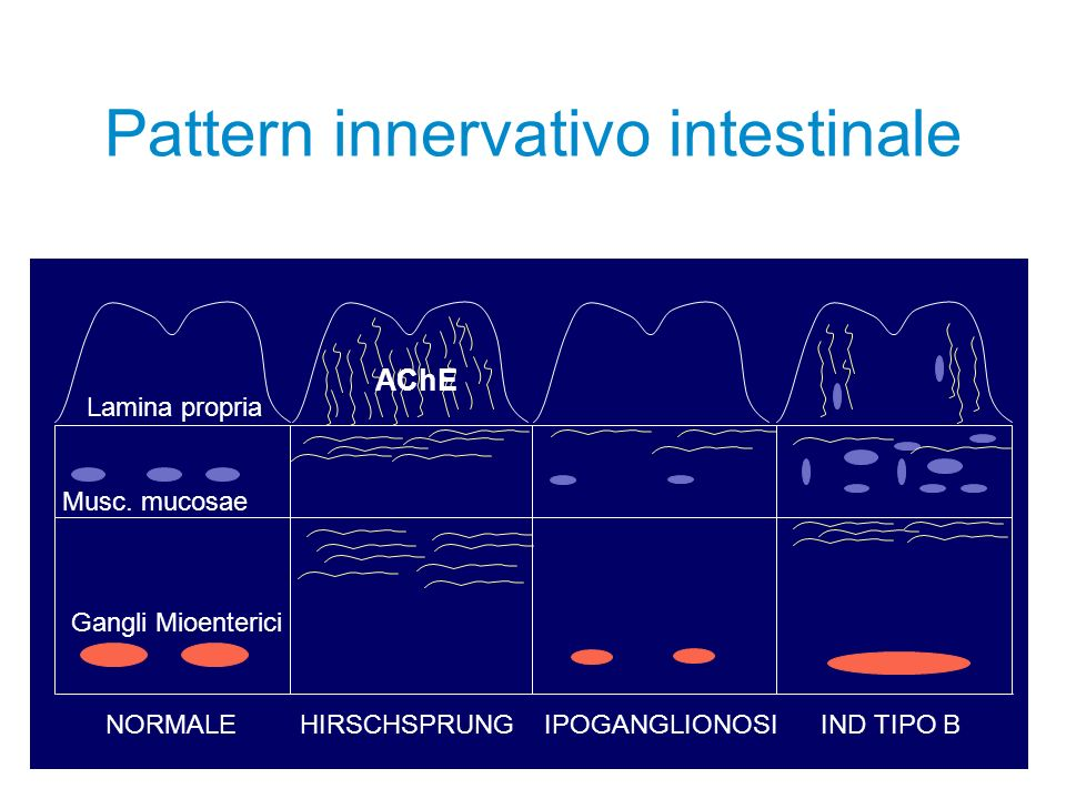 Pattern innervativo intestinale