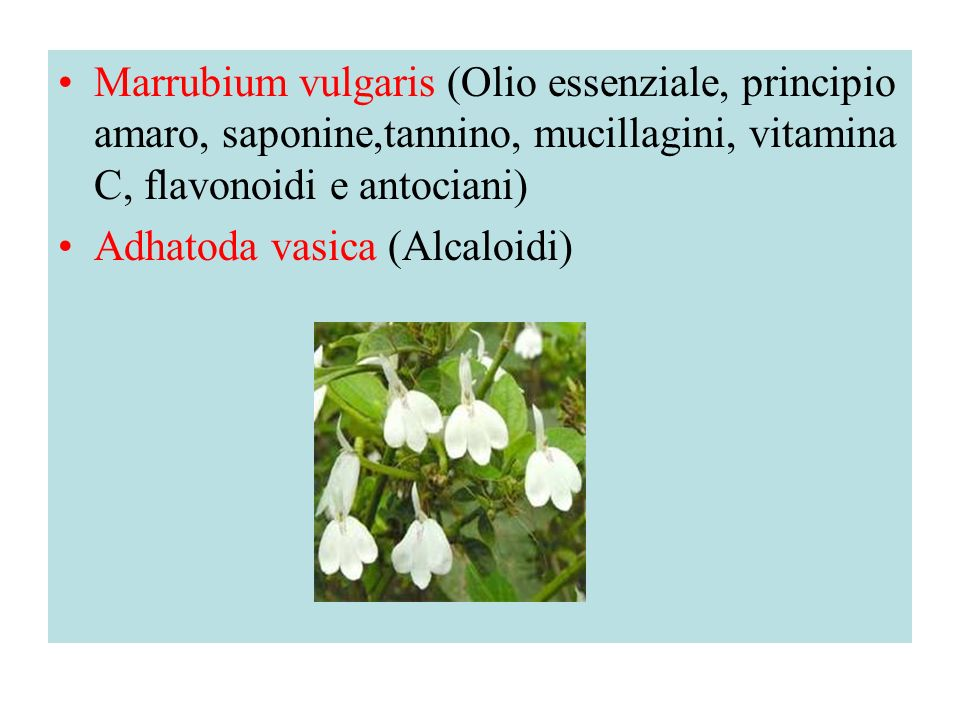 Marrubium vulgaris (Olio essenziale, principio amaro, saponine,tannino, mucillagini, vitamina C, flavonoidi e antociani)