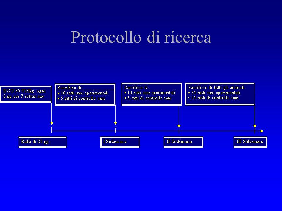 Protocollo di ricerca