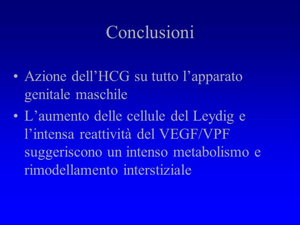 Conclusioni Azione dell'HCG su tutto l'apparato genitale maschile