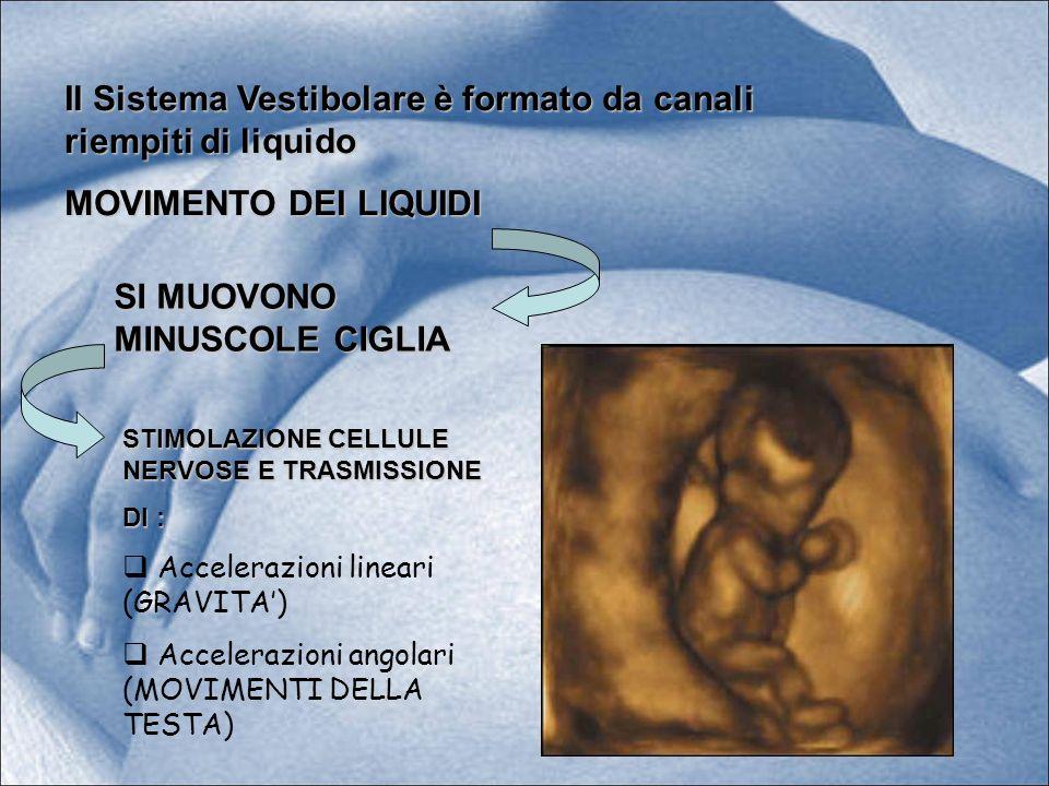 Il Sistema Vestibolare è formato da canali riempiti di liquido