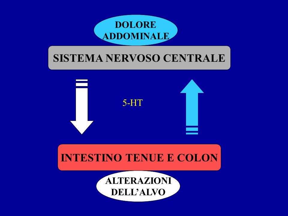 SISTEMA NERVOSO CENTRALE INTESTINO TENUE E COLON