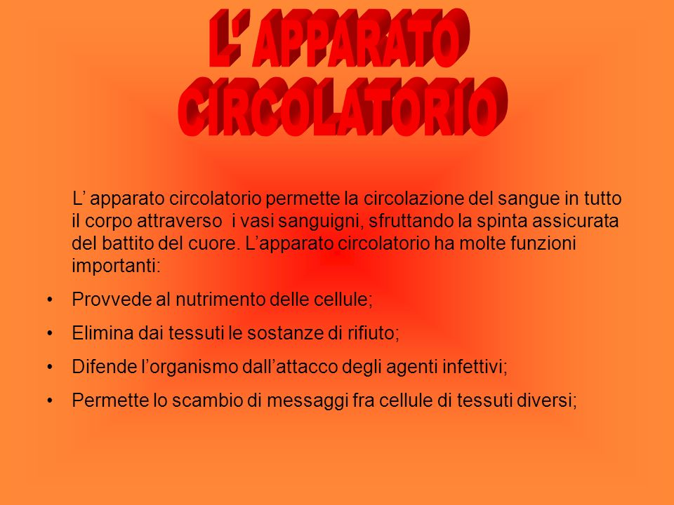 L APPARATO CIRCOLATORIO