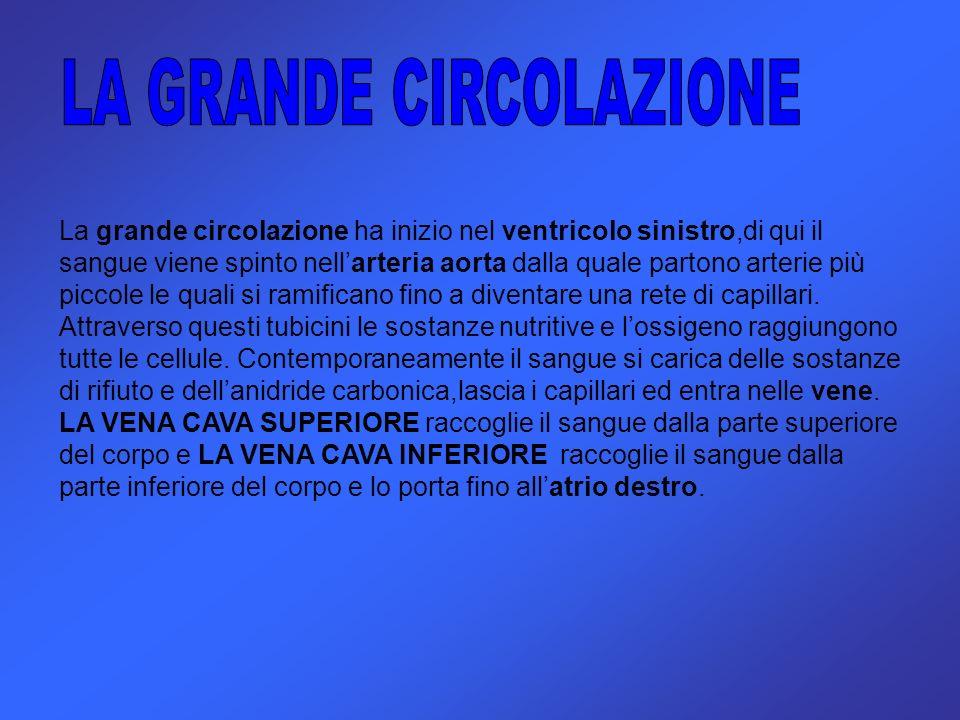 LA GRANDE CIRCOLAZIONE