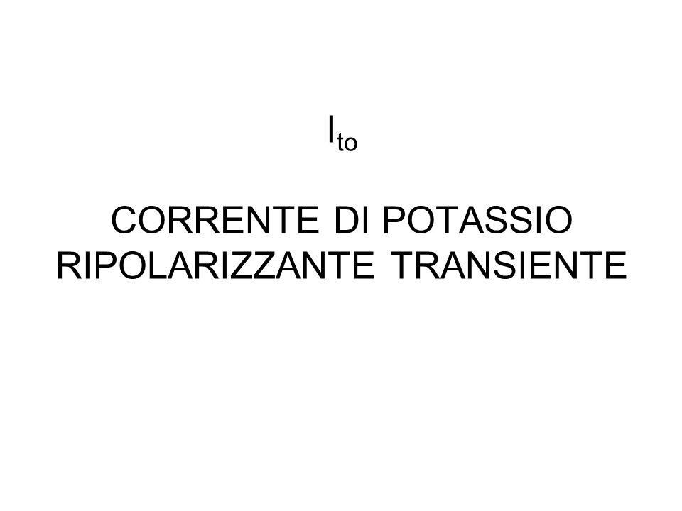Ito CORRENTE DI POTASSIO RIPOLARIZZANTE TRANSIENTE