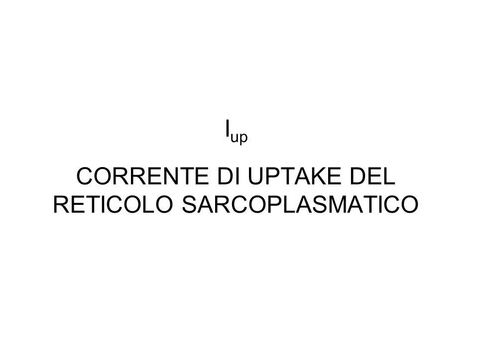 Iup CORRENTE DI UPTAKE DEL RETICOLO SARCOPLASMATICO