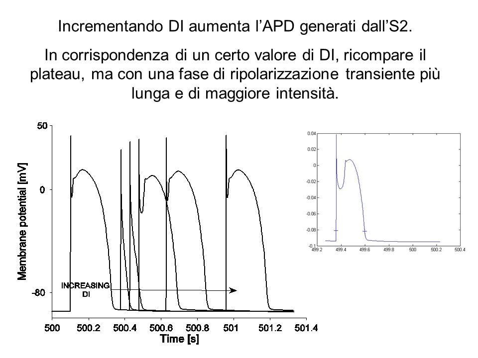 Incrementando DI aumenta l'APD generati dall'S2.