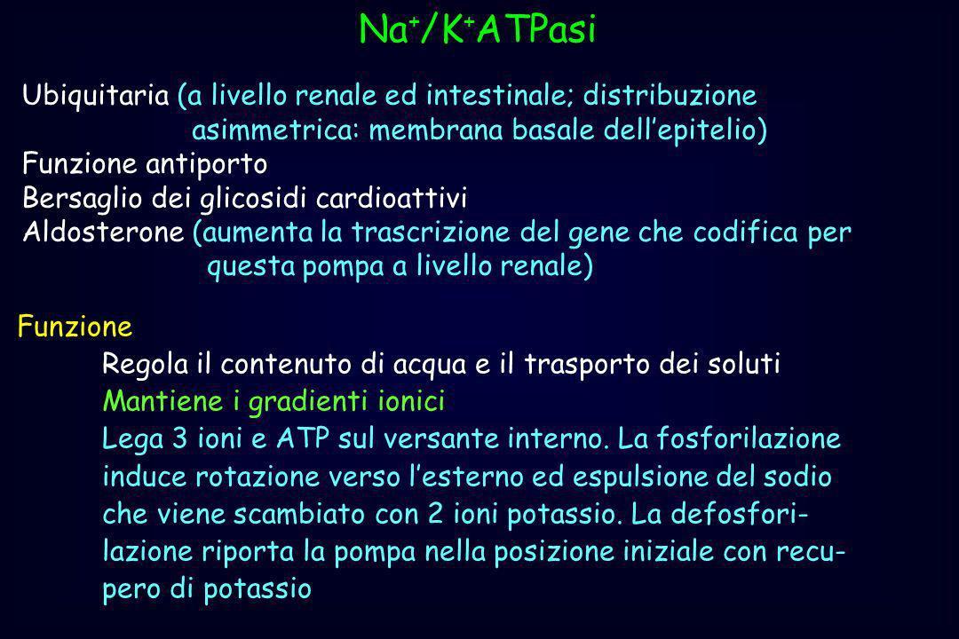 Na+/K+ATPasiUbiquitaria (a livello renale ed intestinale; distribuzione. asimmetrica: membrana basale dell'epitelio)