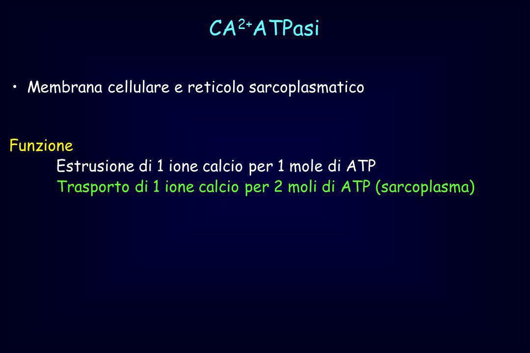 CA2+ATPasi Membrana cellulare e reticolo sarcoplasmatico Funzione