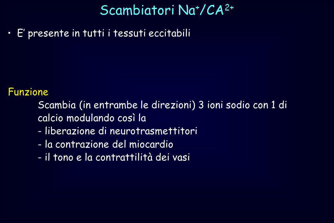 Scambiatori Na+/CA2+ E' presente in tutti i tessuti eccitabili
