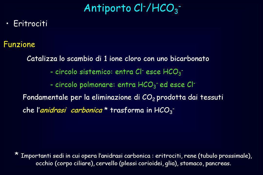 Antiporto Cl-/HCO3- Eritrociti Funzione