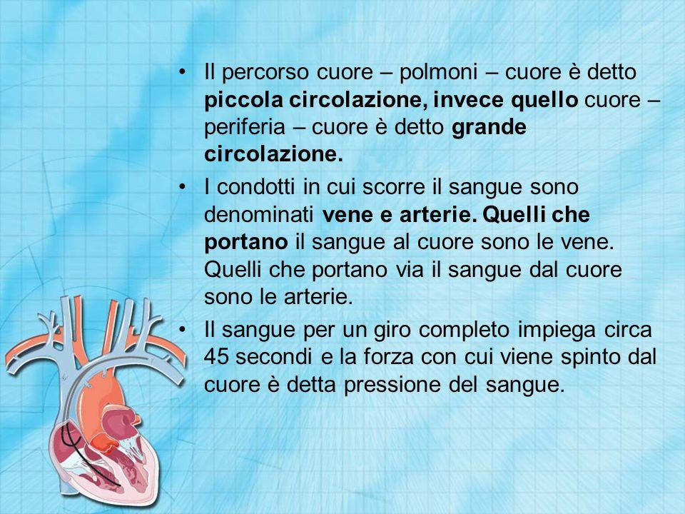 Il percorso cuore – polmoni – cuore è detto piccola circolazione, invece quello cuore – periferia – cuore è detto grande circolazione.