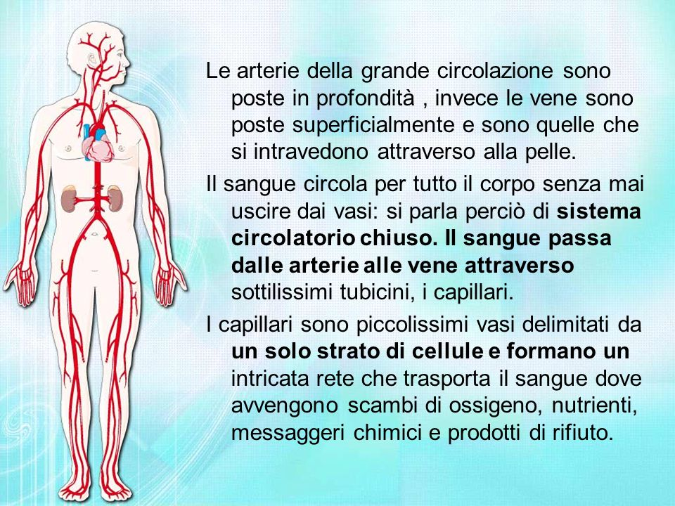 Le arterie della grande circolazione sono poste in profondità , invece le vene sono poste superficialmente e sono quelle che si intravedono attraverso alla pelle.