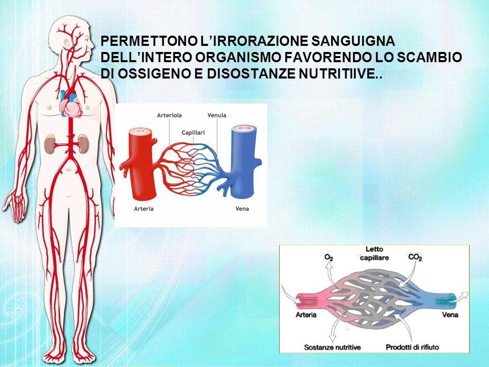 PERMETTONO L'IRRORAZIONE SANGUIGNA DELL'INTERO ORGANISMO FAVORENDO LO SCAMBIO DI OSSIGENO E DISOSTANZE NUTRITIIVE..