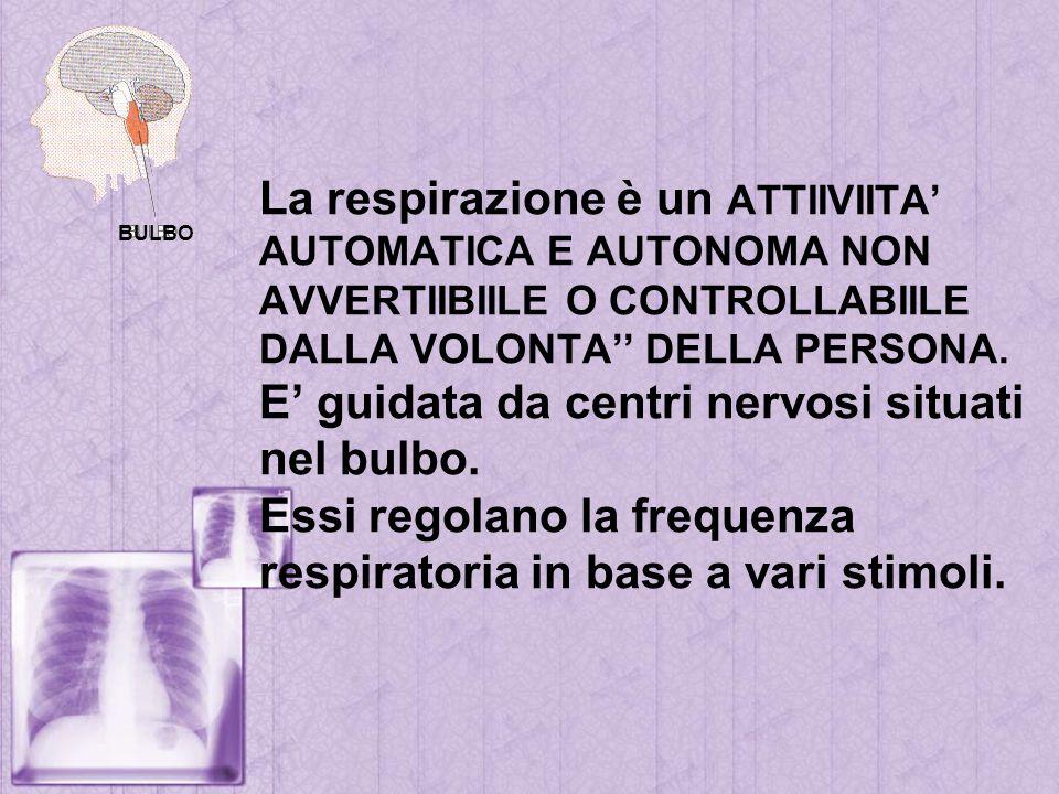La respirazione è un ATTIIVIITA' AUTOMATICA E AUTONOMA NON AVVERTIIBIILE O CONTROLLABIILE DALLA VOLONTA'' DELLA PERSONA. E' guidata da centri nervosi situati nel bulbo. Essi regolano la frequenza respiratoria in base a vari stimoli.