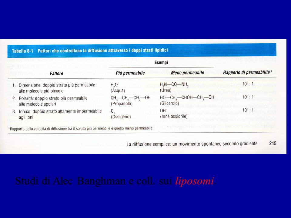 Studi di Alec Banghman e coll. sui liposomi.