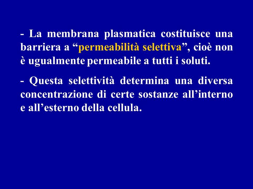 - La membrana plasmatica costituisce una barriera a permeabilità selettiva , cioè non è ugualmente permeabile a tutti i soluti.