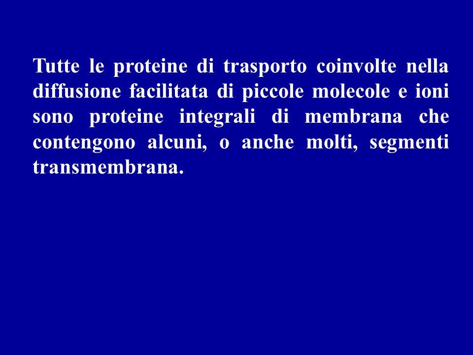 Tutte le proteine di trasporto coinvolte nella diffusione facilitata di piccole molecole e ioni sono proteine integrali di membrana che contengono alcuni, o anche molti, segmenti transmembrana.