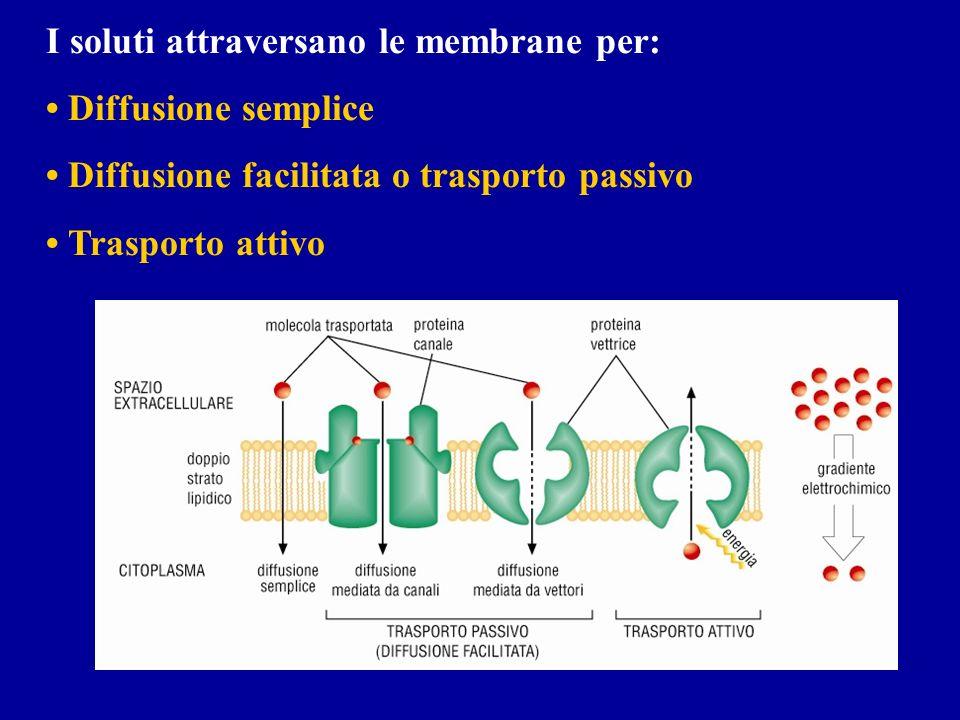 I soluti attraversano le membrane per: