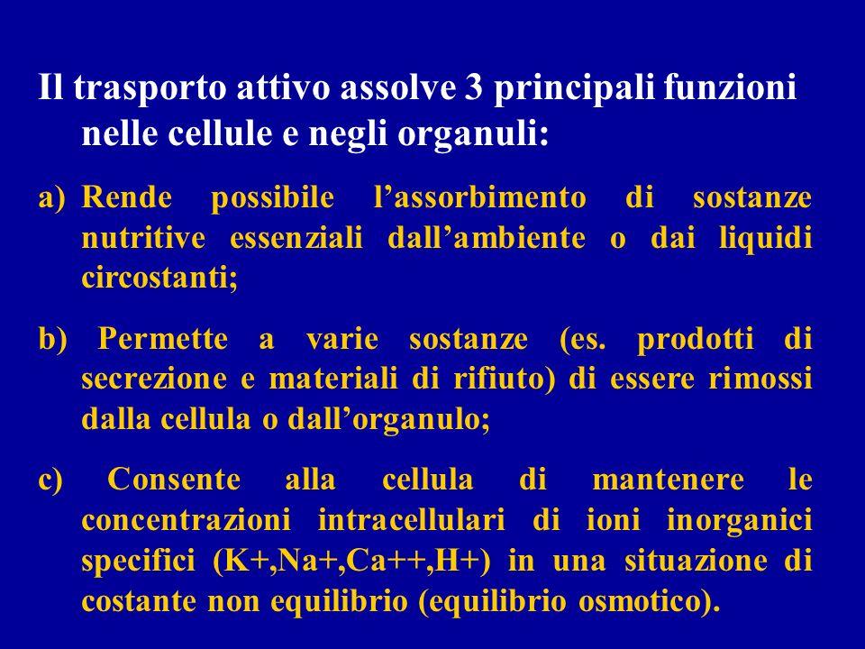 Il trasporto attivo assolve 3 principali funzioni nelle cellule e negli organuli: