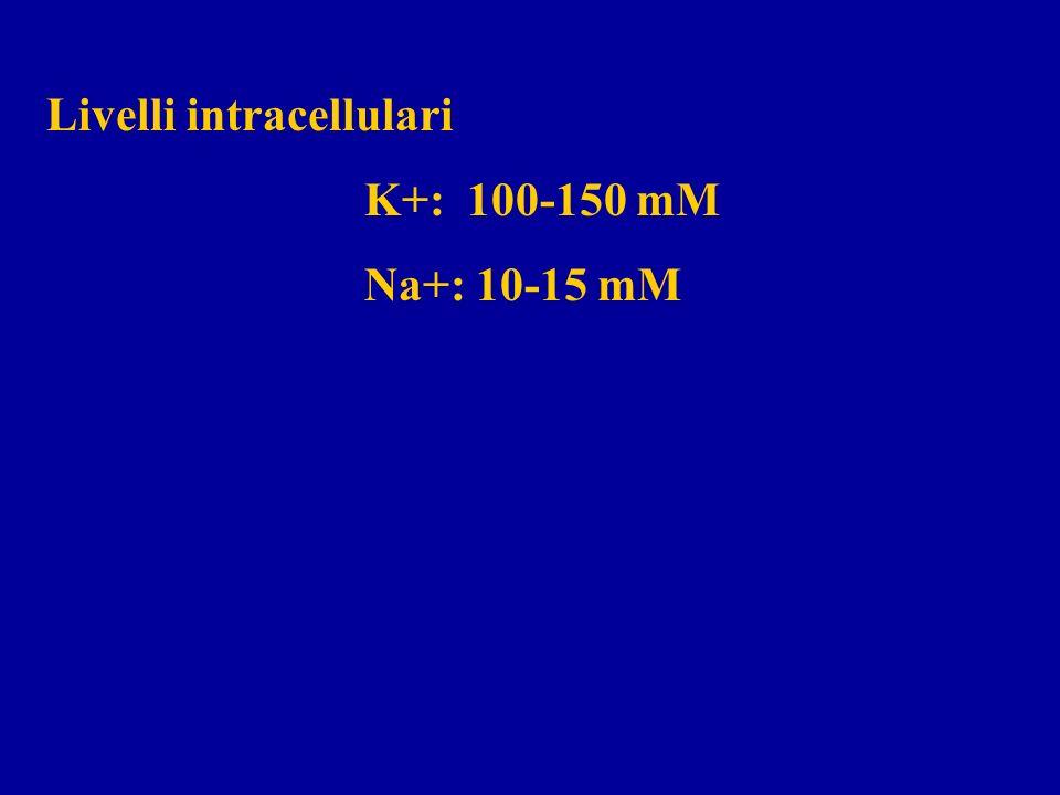Livelli intracellulari