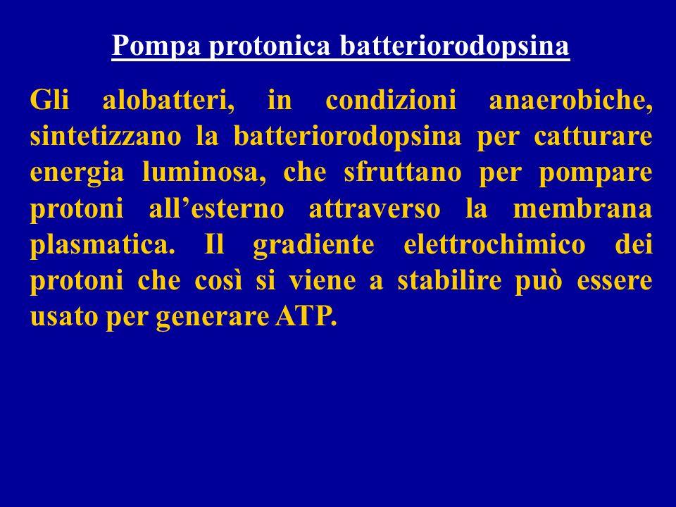 Pompa protonica batteriorodopsina