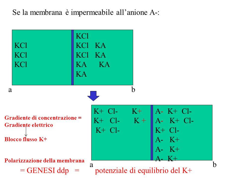 Se la membrana è impermeabile all'anione A-: