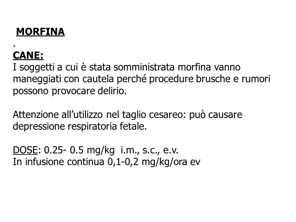 MORFINA. CANE: