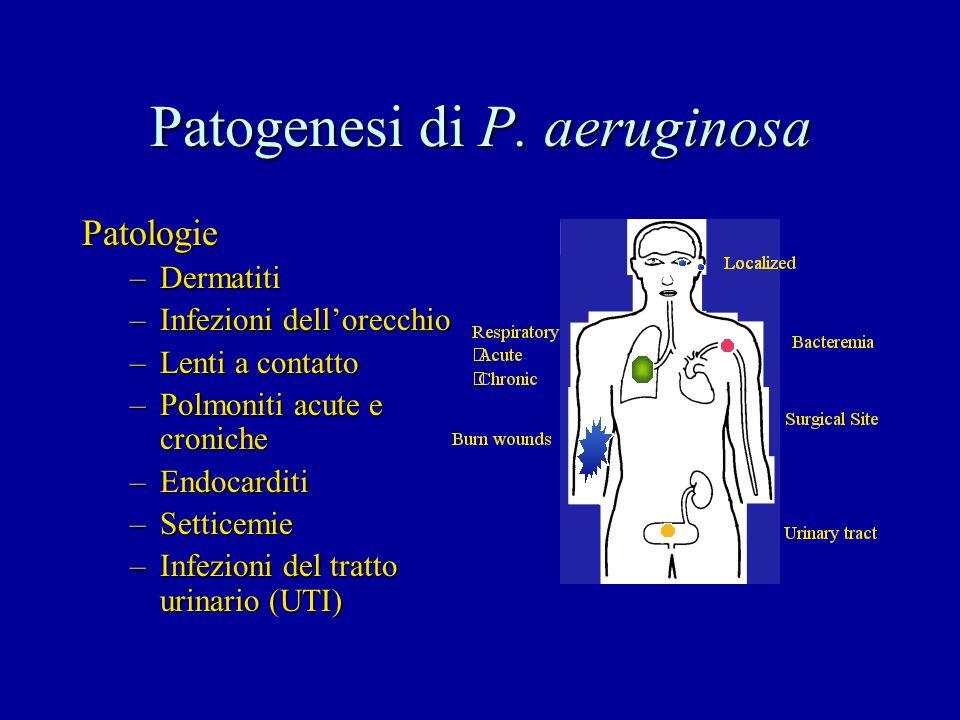 Patogenesi di P. aeruginosa