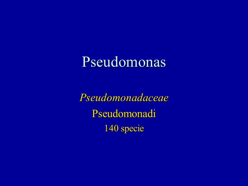 Pseudomonadaceae Pseudomonadi 140 specie