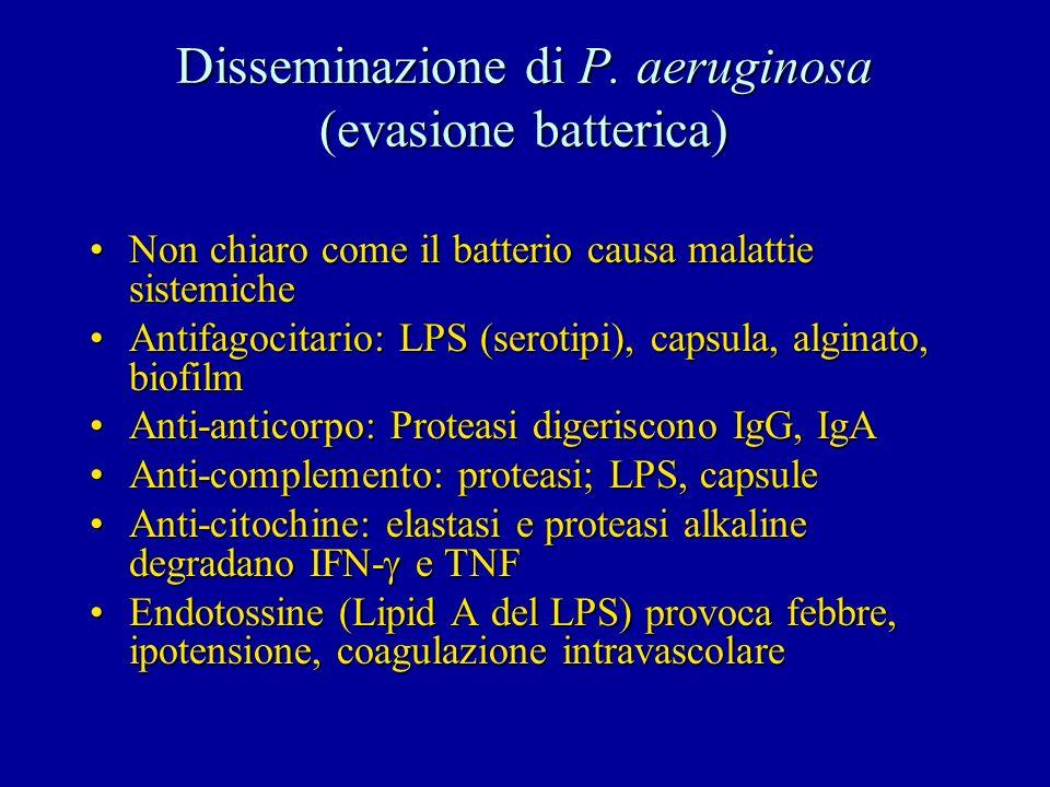 Disseminazione di P. aeruginosa (evasione batterica)