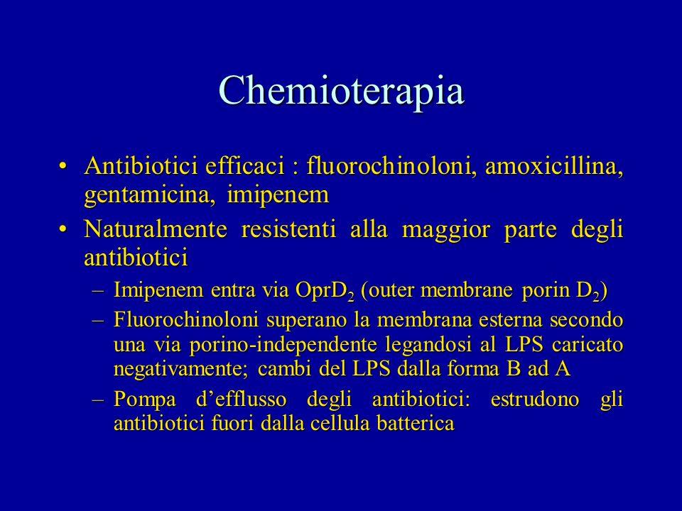 Chemioterapia Antibiotici efficaci : fluorochinoloni, amoxicillina, gentamicina, imipenem.