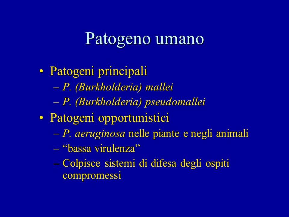Patogeno umano Patogeni principali Patogeni opportunistici