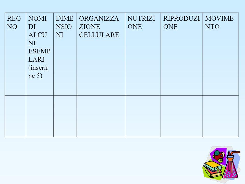 REGNO NOMI DI ALCUNI ESEMPLARI. (inserirne 5) DIMENSIONI. ORGANIZZAZIONE. CELLULARE. NUTRIZIONE.