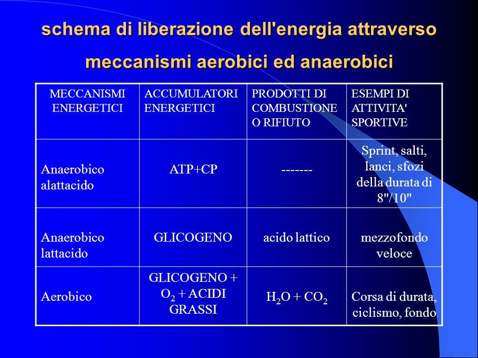 schema di liberazione dell energia attraverso meccanismi aerobici ed anaerobici