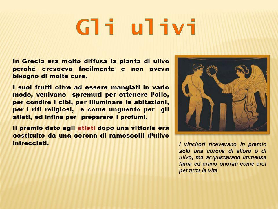 Gli ulivi In Grecia era molto diffusa la pianta di ulivo perché cresceva facilmente e non aveva bisogno di molte cure.