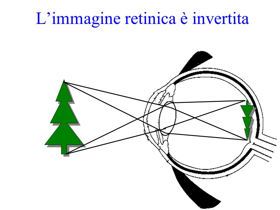 L'immagine retinica è invertita