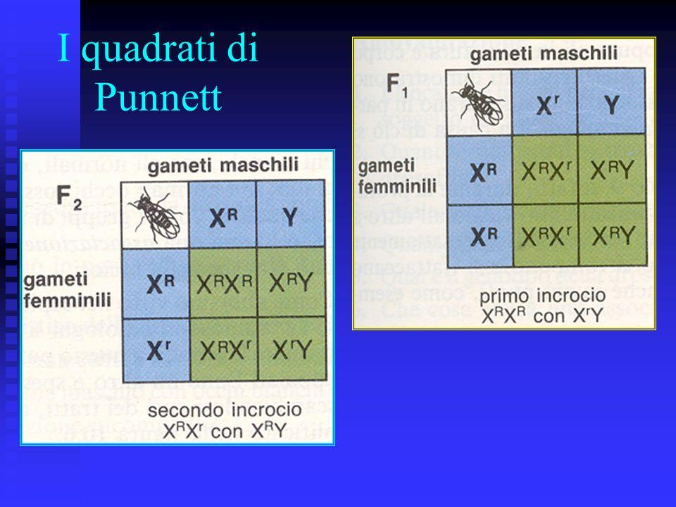 I quadrati di Punnett