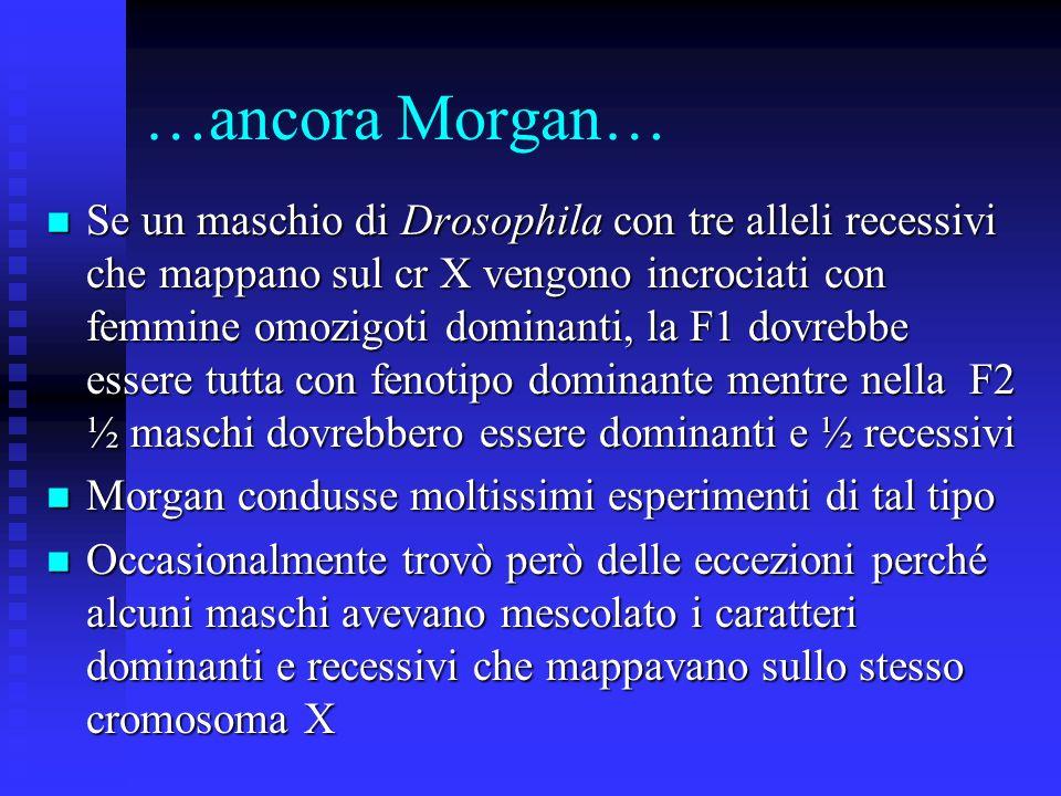 …ancora Morgan…