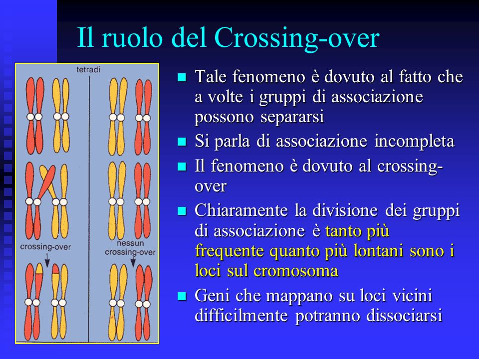 Il ruolo del Crossing-over