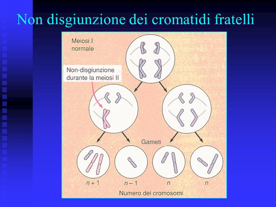 Non disgiunzione dei cromatidi fratelli