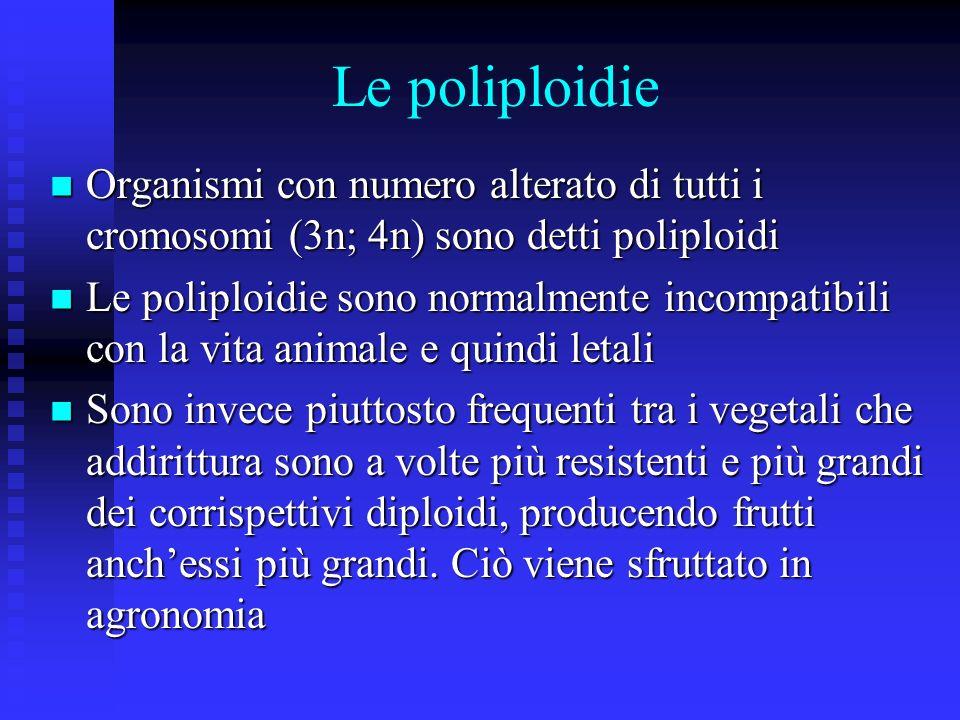 Le poliploidie Organismi con numero alterato di tutti i cromosomi (3n; 4n) sono detti poliploidi.
