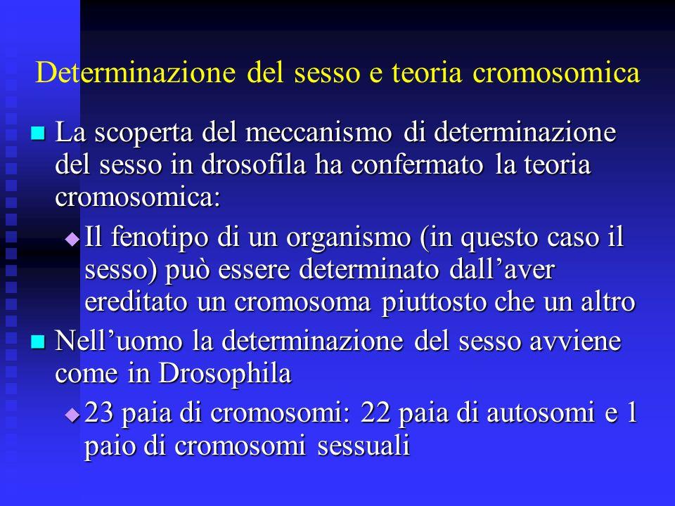 Determinazione del sesso e teoria cromosomica